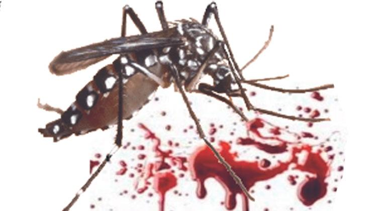 Image result for nyamuk aedes